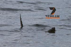 10 Mitos Danau Toba